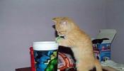 我只偷喝一口,千万别告诉主人