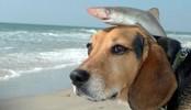 有鲨鱼哥在,看哪个还敢瞧不起我