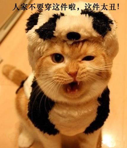 无敌猫咪,不信雷不翻你!