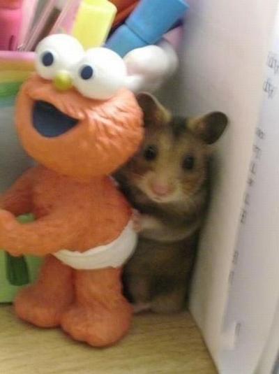 好萌的一只小老鼠