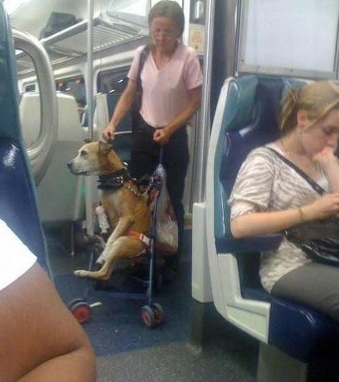 狗狗专用车
