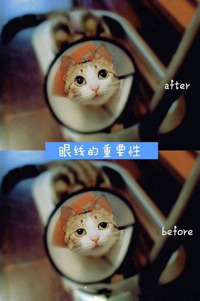 猫也知道,眼线很重要~