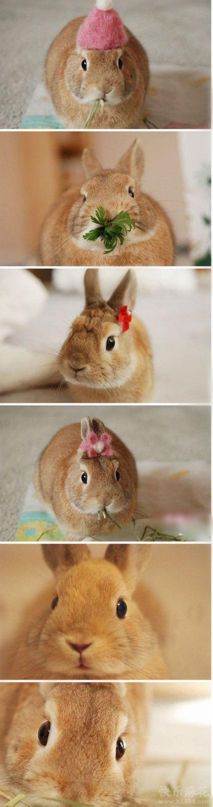 史上最萌的小兔子